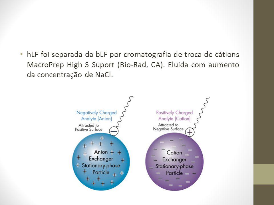 hLF foi separada da bLF por cromatografia de troca de cátions MacroPrep High S Suport (Bio-Rad, CA). Eluída com aumento da concentração de NaCl.