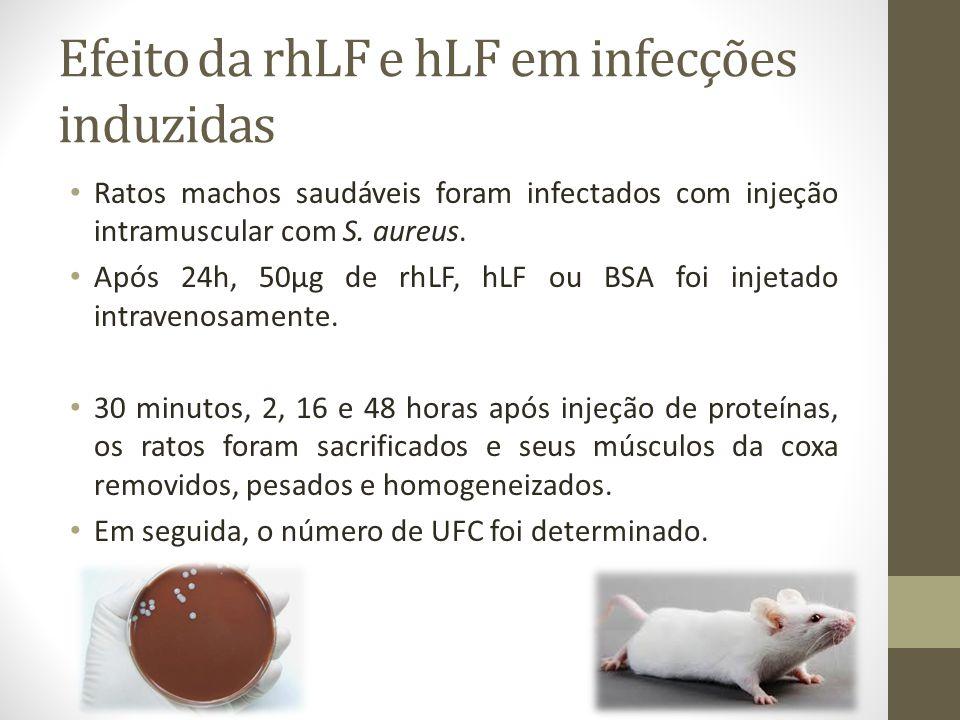 Efeito da rhLF e hLF em infecções induzidas Ratos machos saudáveis foram infectados com injeção intramuscular com S. aureus. Após 24h, 50µg de rhLF, h