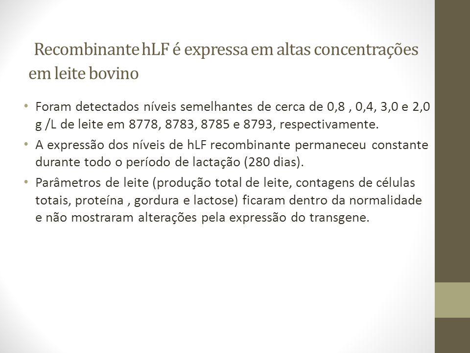 Recombinante hLF é expressa em altas concentrações em leite bovino Foram detectados níveis semelhantes de cerca de 0,8, 0,4, 3,0 e 2,0 g /L de leite e