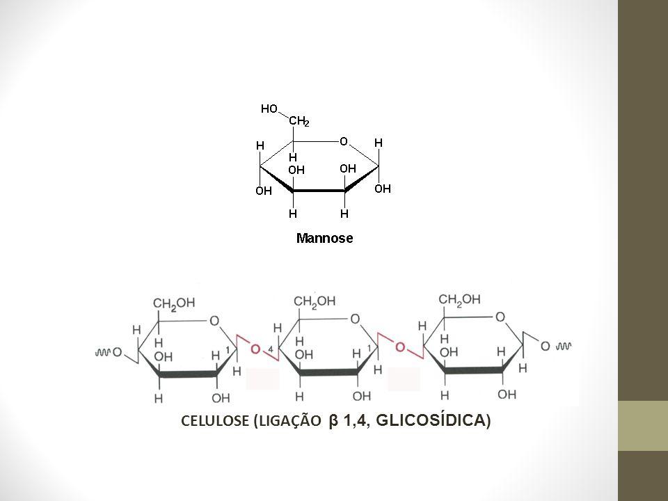 CELULOSE (LIGAÇÃO β 1,4, GLICOSÍDICA)