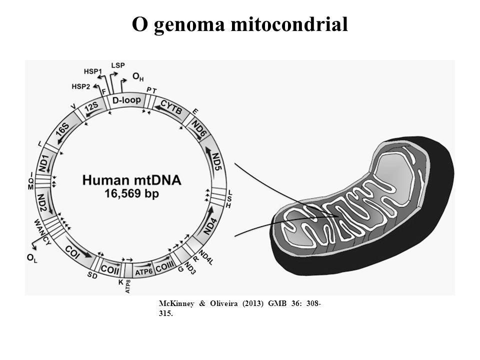 O genoma mitocondrial McKinney & Oliveira (2013) GMB 36: 308- 315.
