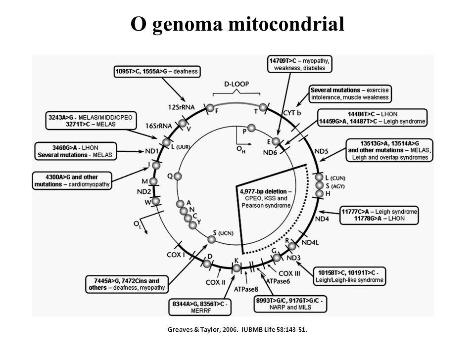 Greaves & Taylor, 2006. IUBMB Life 58:143-51. O genoma mitocondrial