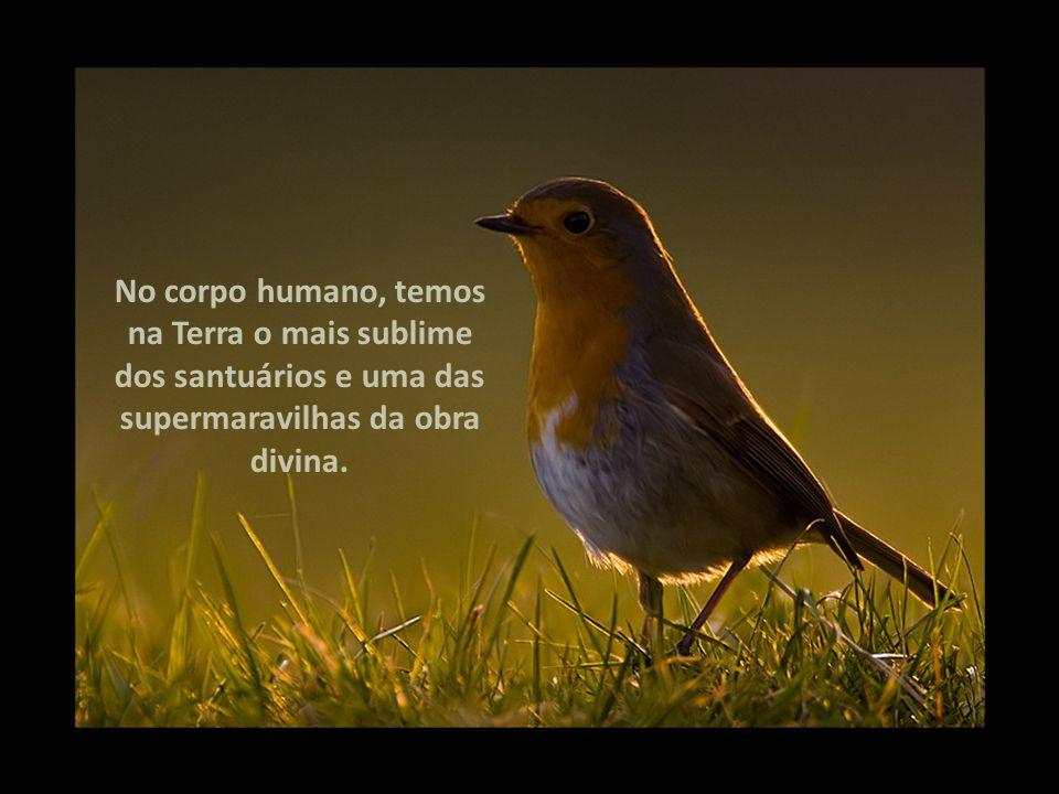 Apresentação com som. Clique apenas mudar de slide. ROTEIRO Emmanuel / Francisco Cândido Xavier