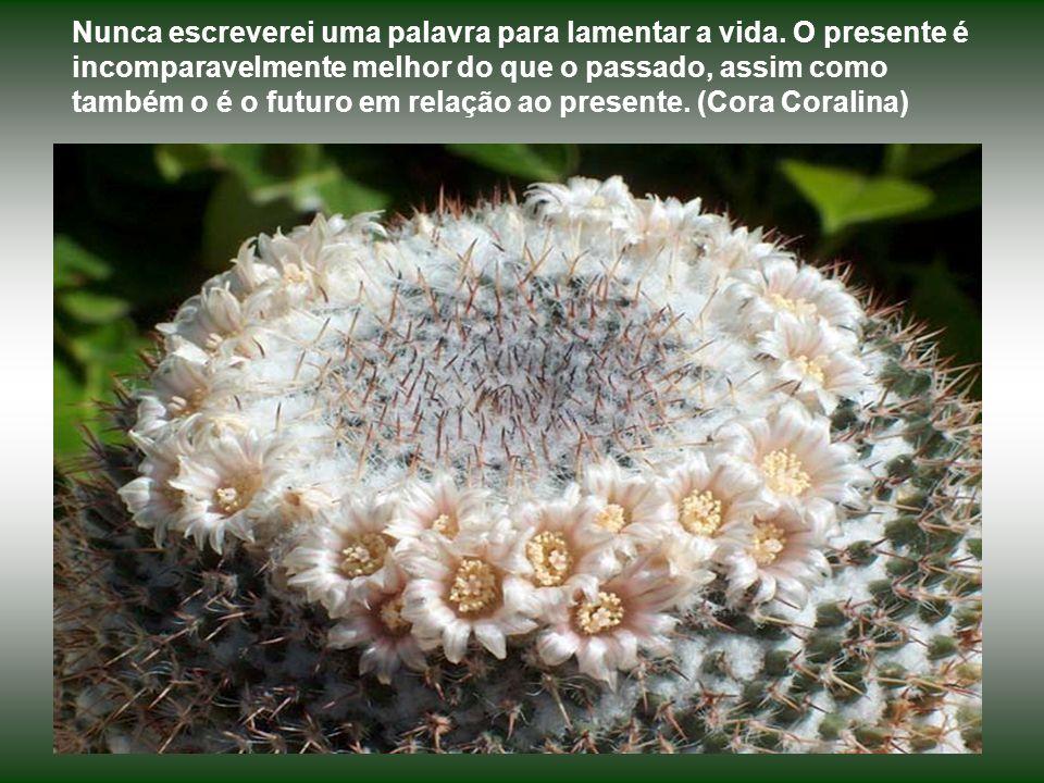 O que vale na vida não é o ponto de partida e sim a caminhada. Caminhando e semeando no fim terás o que colher.. (Cora Coralina)