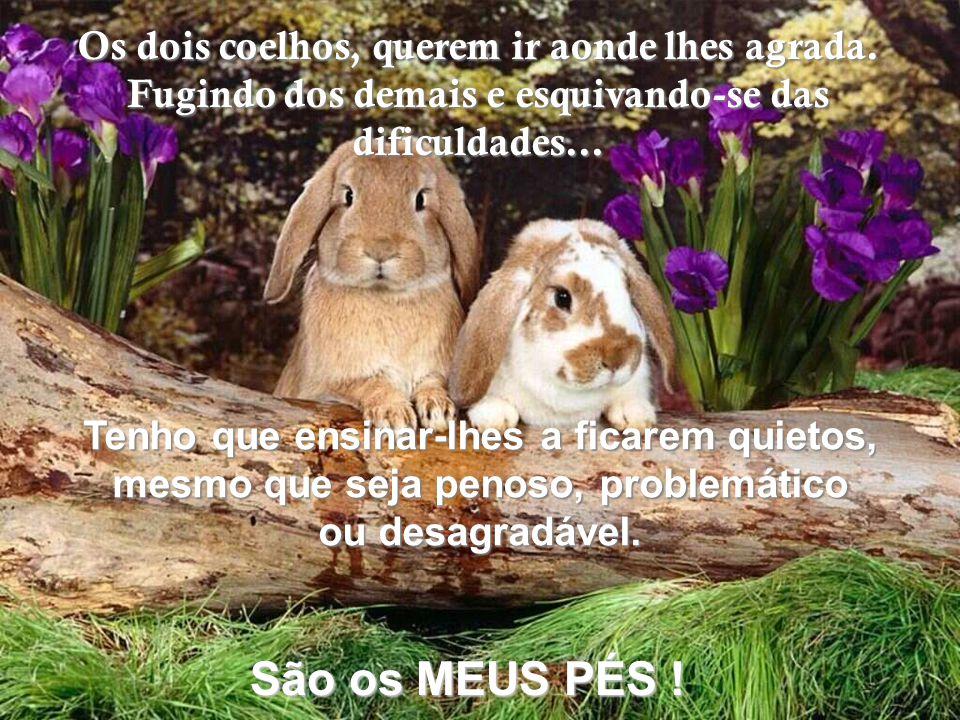 Os dois coelhos, querem ir aonde lhes agrada.
