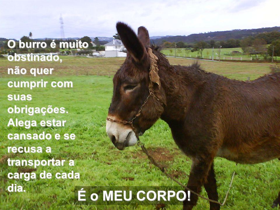 O burro é muito obstinado, não quer cumprir com suas obrigações.