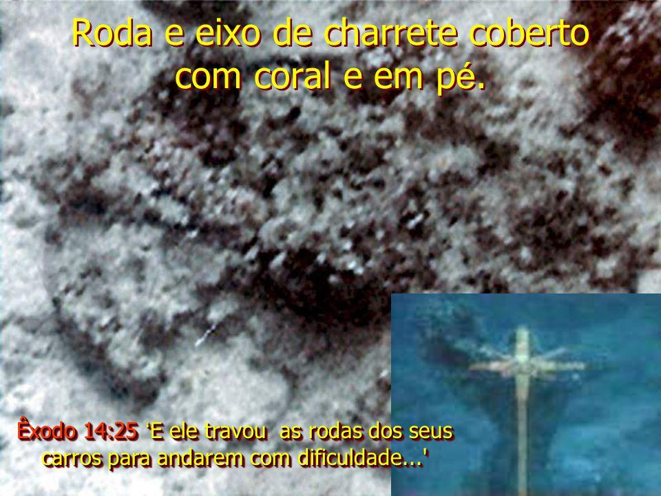 Roda e eixo de charrete coberto com coral e em p é. Êxodo 14:25 E ele travou as rodas dos seus carros para andarem com dificuldade...'