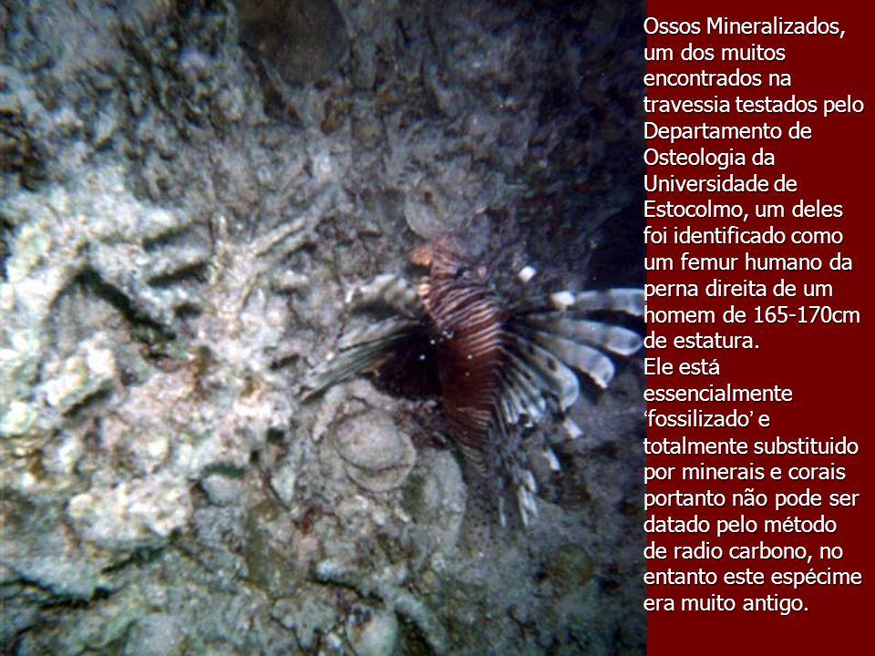 Ossos Mineralizados, um dos muitos encontrados na travessia testados pelo Departamento de Osteologia da Universidade de Estocolmo, um deles foi identi