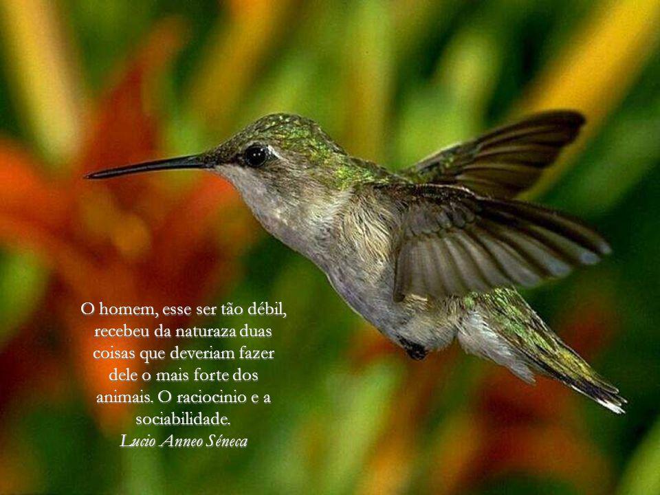 De todos os animais da criação homem é o único que bebe sem ter sede, come sem ter fome e fala sem ter nada que dizer. John Steinbeck