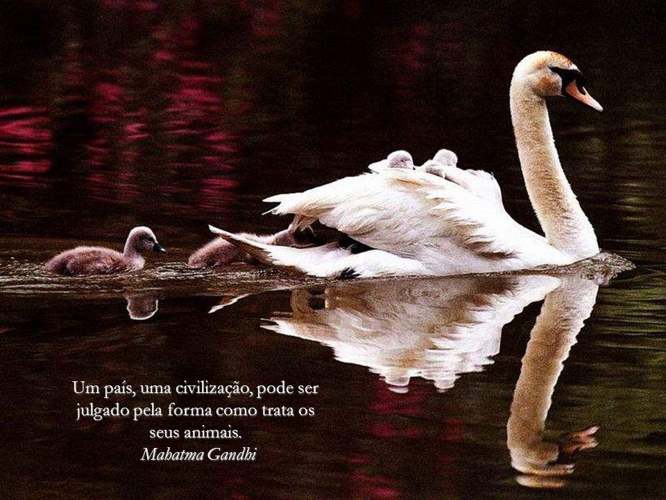 O homem, esse ser tão débil, recebeu da naturaza duas coisas que deveriam fazer dele o mais forte dos animais.