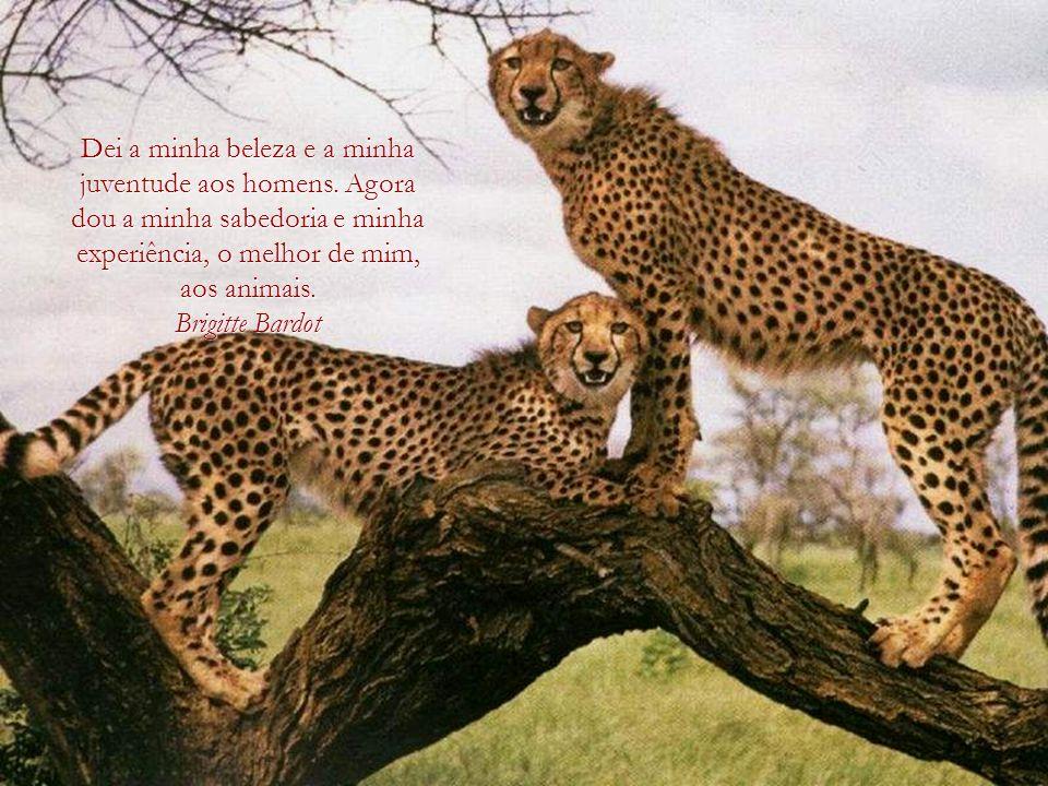 Um país, uma civilização, pode ser julgado pela forma como trata os seus animais. Mahatma Gandhi Mahatma Gandhi
