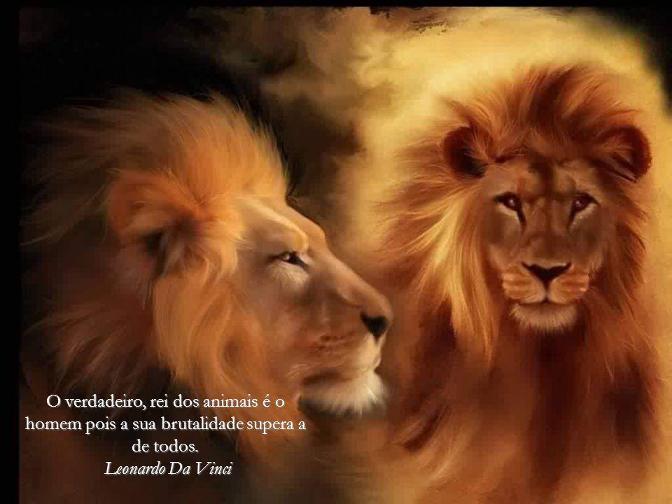 O verdadeiro, rei dos animais é o homem pois a sua brutalidade supera a de todos.
