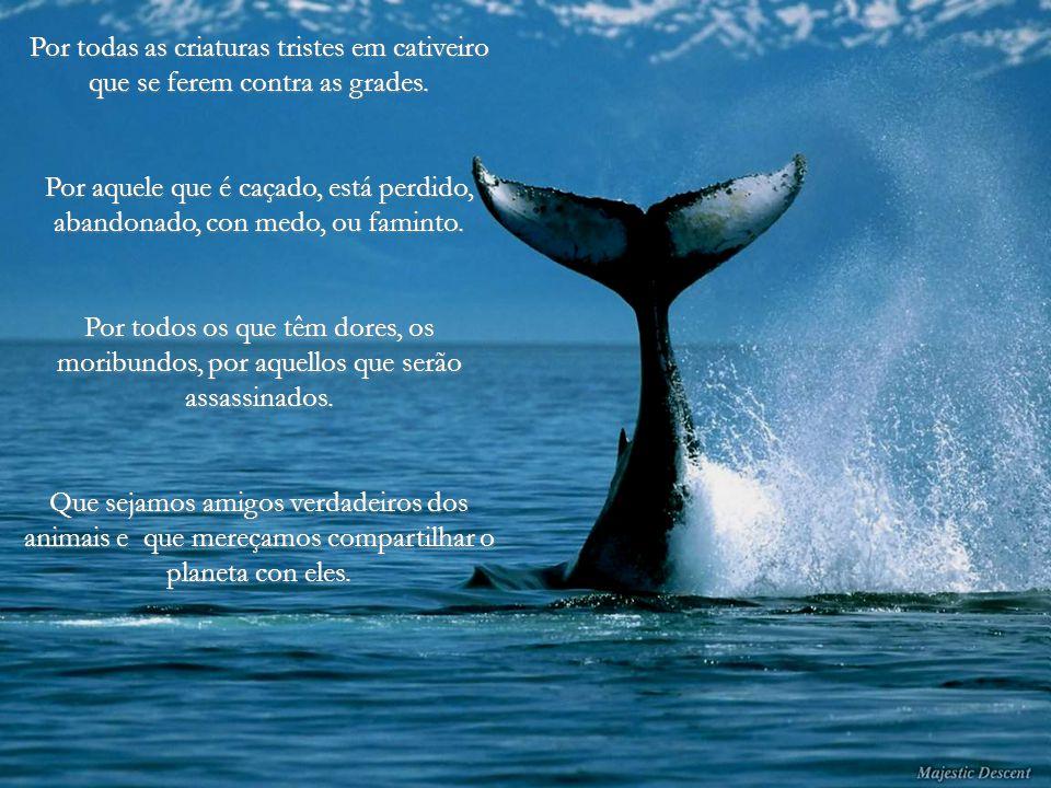 Quando o homem se apiedar de todas as criaturas vivas, só então, será nobre. Buda.