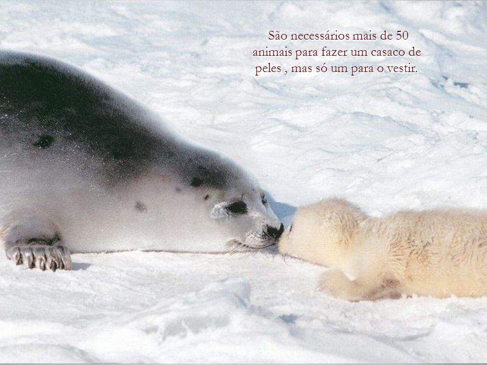 Os animais são bons amigos, não fazem perguntas e taõ-pouco critican. George Elliot George Elliot