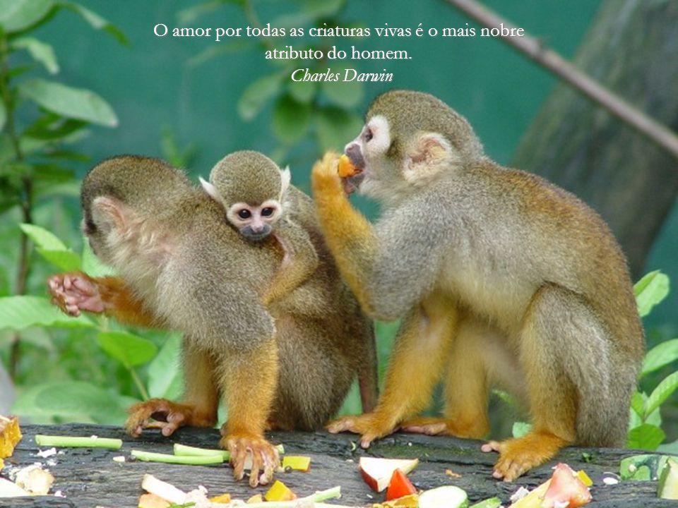 De todos os animais da criação homem é o único que bebe sem ter sede, come sem ter fome e fala sem ter nada que dizer.