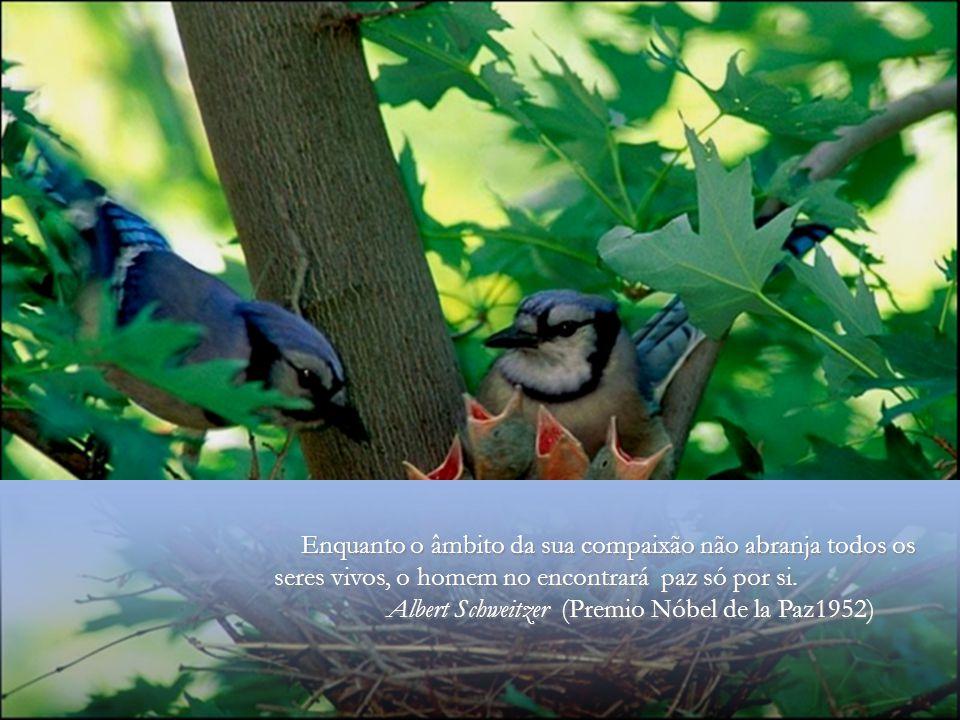 O ter pena, é sempre o mesmo sentimento, quer o tenhas por um animal, por un homem ou por una mosca.