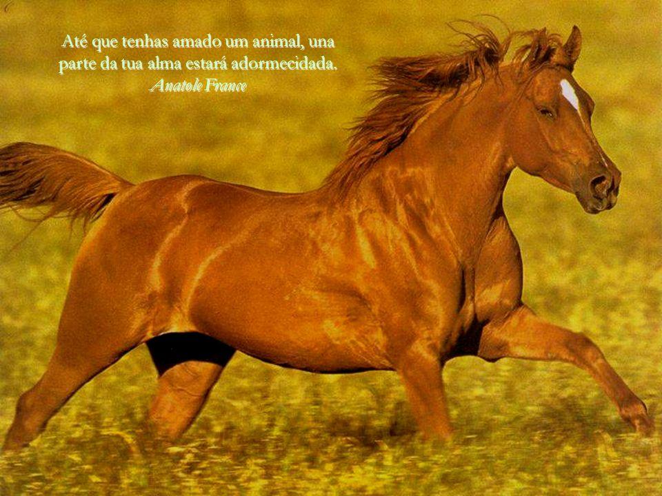 Até que tenhas amado um animal, una parte da tua alma estará adormecidada. Anatole France