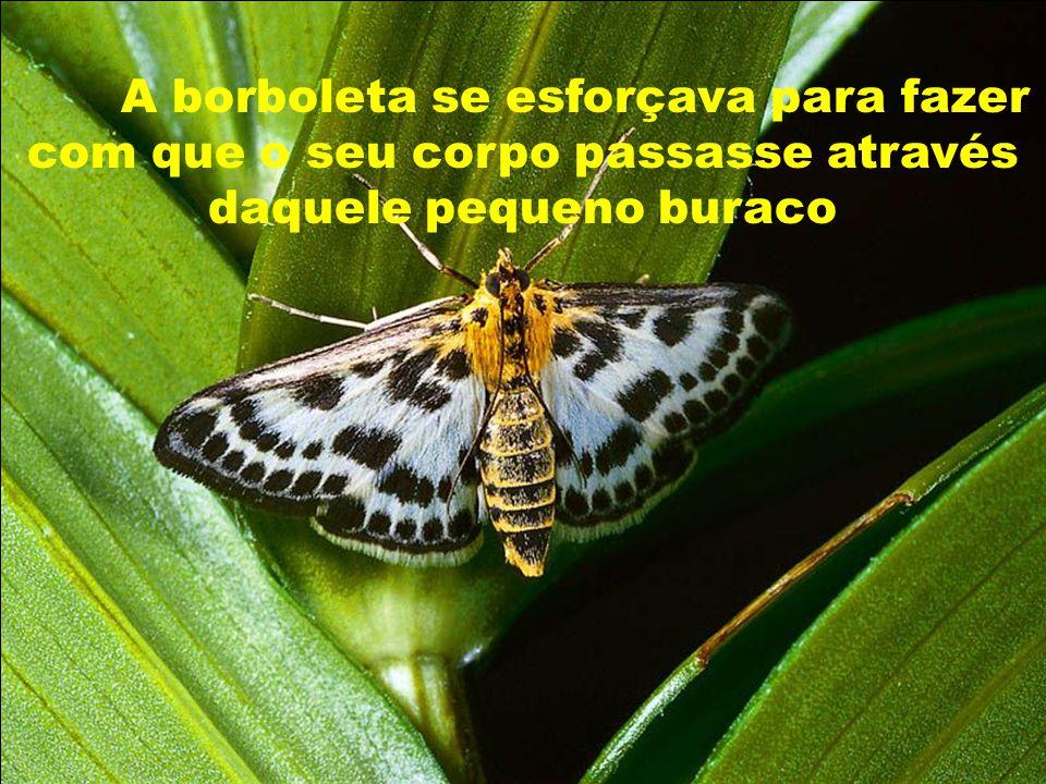 Na verdade, a borboleta passou o tempo de sua vida rastejando com o corpo murcho e as asas encolhidas.