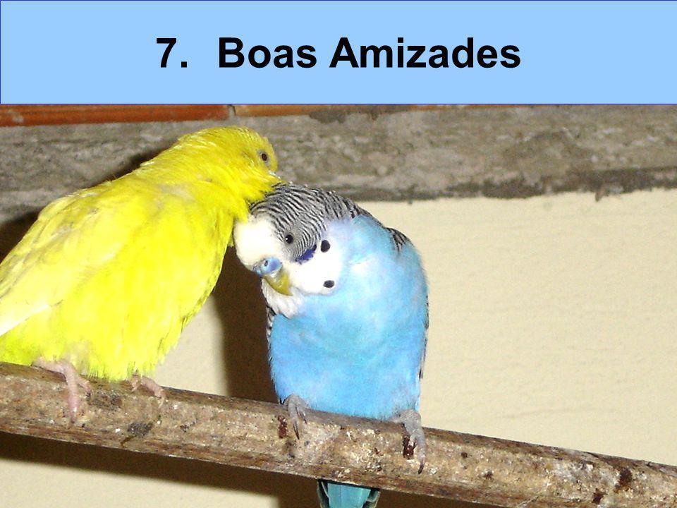 7.Boas Amizades