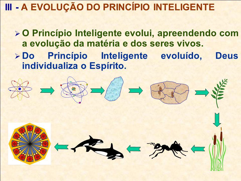 III - A EVOLUÇÃO DO PRINCÍPIO INTELIGENTE O Princípio Inteligente evolui, apreendendo com a evolução da matéria e dos seres vivos.