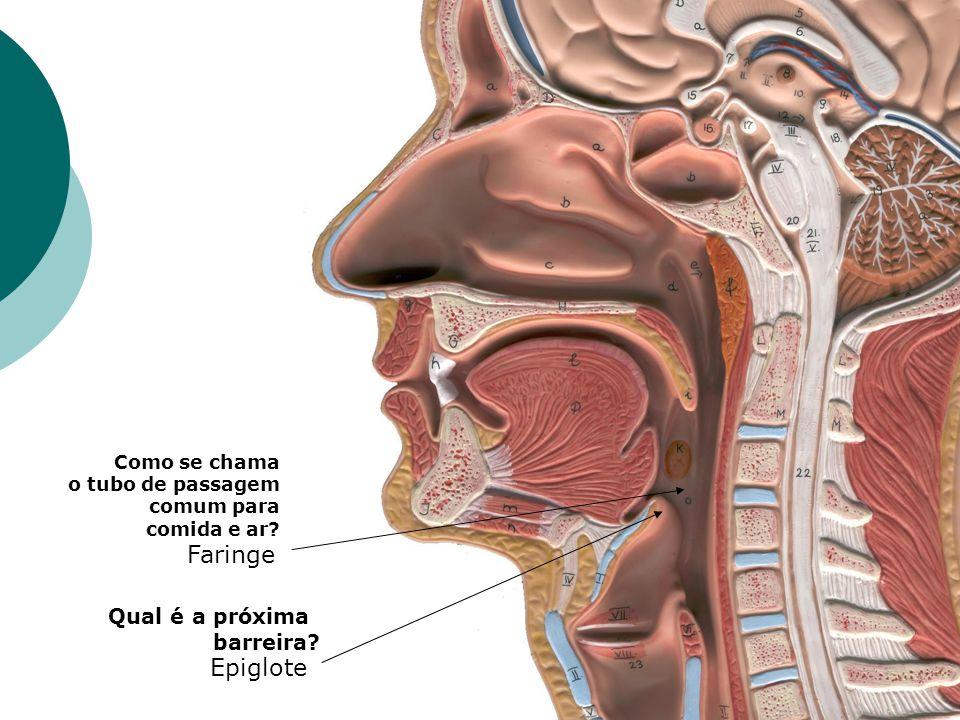 Qual é a próxima barreira? Epiglote Como se chama o tubo de passagem comum para comida e ar? Faringe