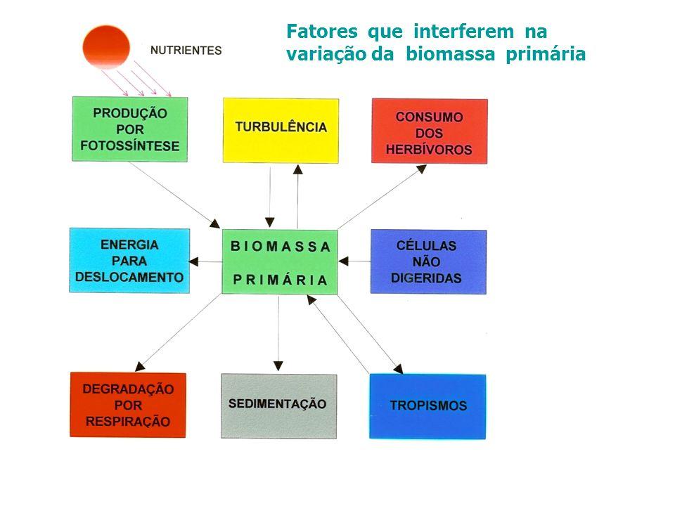 Fatores que interferem na variação da biomassa primária
