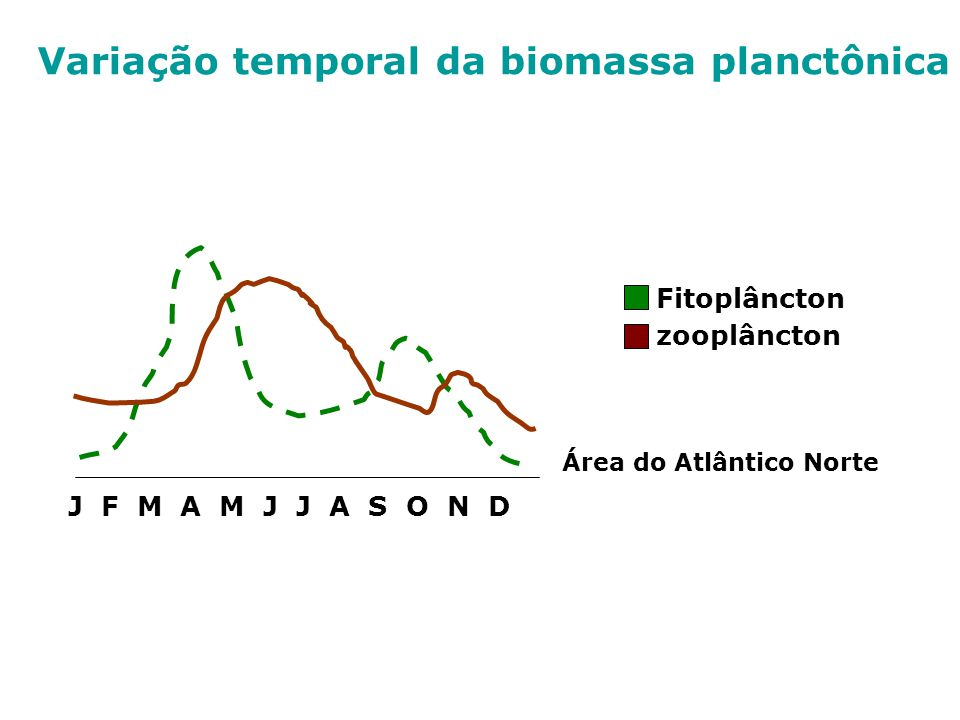 J F M A M J J A S O N D Área do Atlântico Norte Fitoplâncton zooplâncton Variação temporal da biomassa planctônica