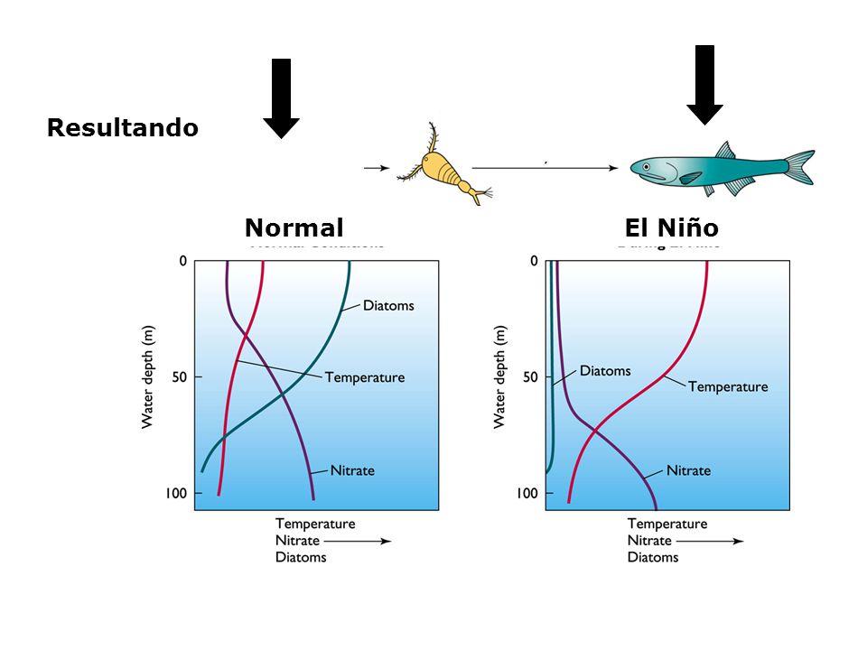 Resultando Normal El Niño