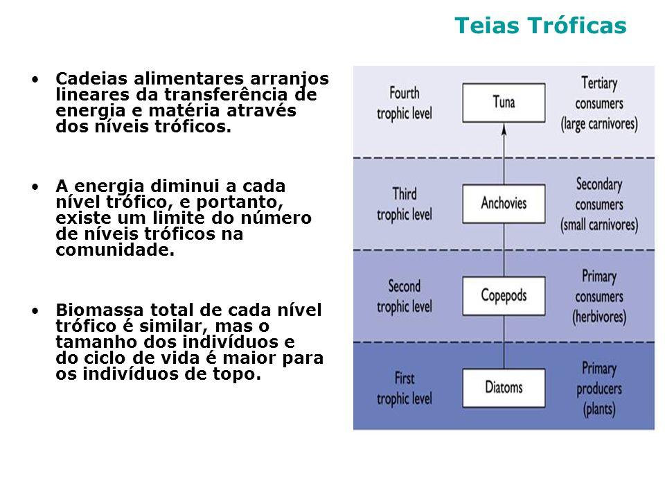 Cadeias alimentares arranjos lineares da transferência de energia e matéria através dos níveis tróficos. A energia diminui a cada nível trófico, e por