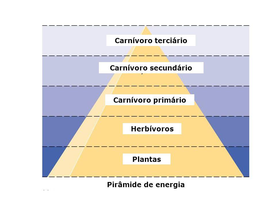 Plantas Herbívoros Carnívoro terciário Carnívoro secundário Carnívoro primário Pirâmide de energia