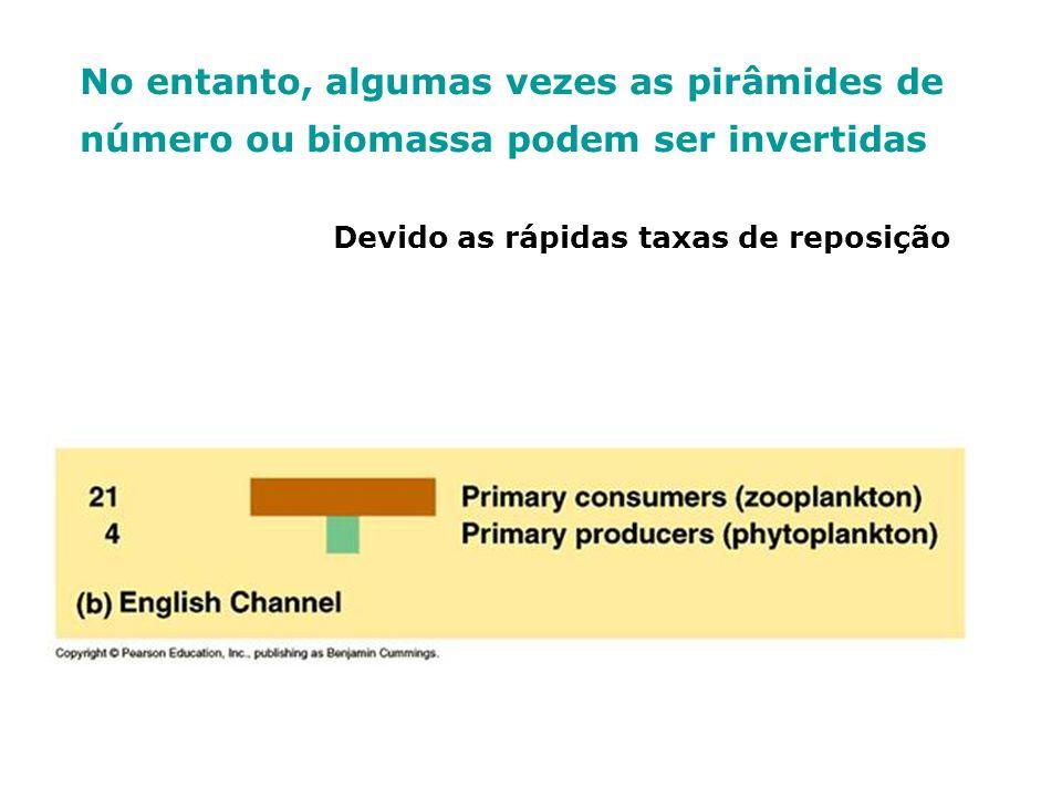 No entanto, algumas vezes as pirâmides de número ou biomassa podem ser invertidas Devido as rápidas taxas de reposição