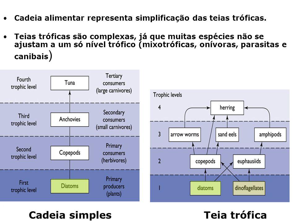 Cadeia alimentar representa simplificação das teias tróficas. Teias tróficas são complexas, já que muitas espécies não se ajustam a um só nível trófic