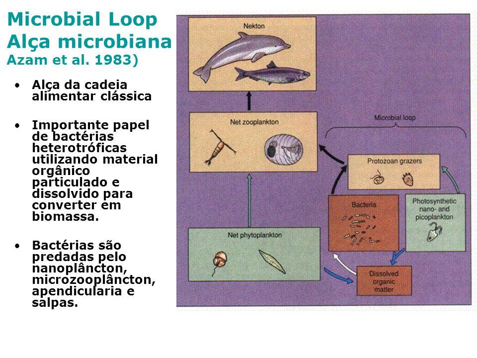 Microbial Loop Alça microbiana Azam et al. 1983) Alça da cadeia alimentar clássica Importante papel de bactérias heterotróficas utilizando material or