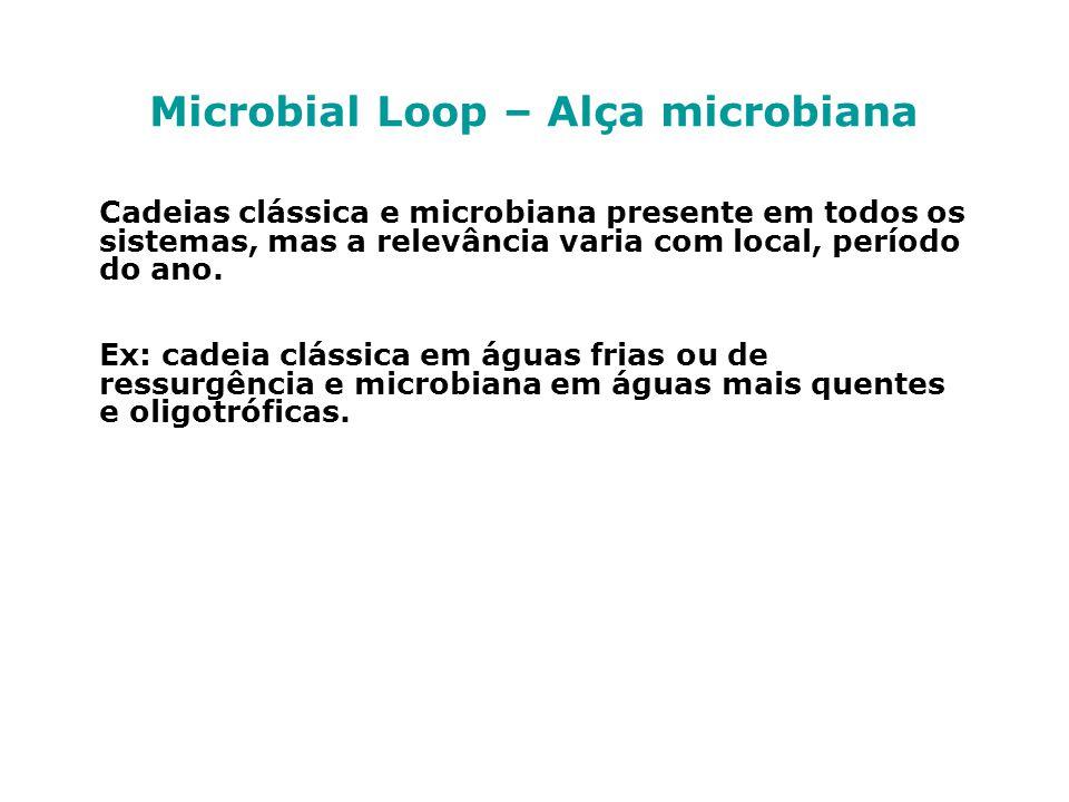Microbial Loop – Alça microbiana Cadeias clássica e microbiana presente em todos os sistemas, mas a relevância varia com local, período do ano. Ex: ca