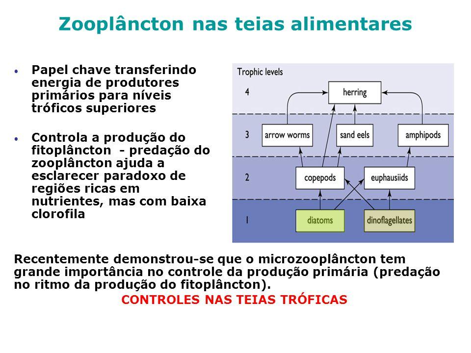 Papel chave transferindo energia de produtores primários para níveis tróficos superiores Controla a produção do fitoplâncton - predação do zooplâncton