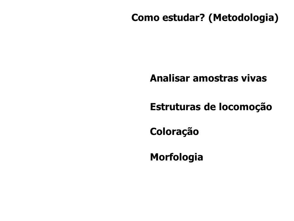 Como estudar? (Metodologia) Analisar amostras vivas Estruturas de locomoção Coloração Morfologia