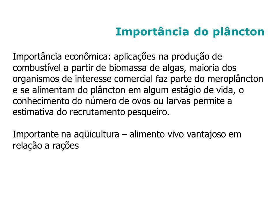 Importância do plâncton Importância econômica: aplicações na produção de combustível a partir de biomassa de algas, maioria dos organismos de interess