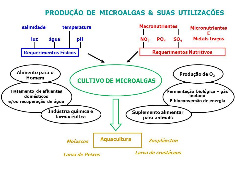 Fermentação biológica – gás metano E bioconversão de energia PRODUÇÃO DE MICROALGAS & SUAS UTILIZAÇÕES salinidadetemperatura luzpHágua Requerimentos F