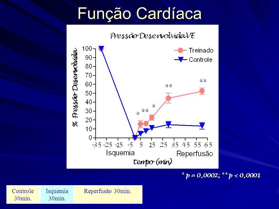 Função Cardíaca * * ** ** ** * p = 0,0002; ** p < 0,0001 Controle 30min. Isquemia 30min. Reperfusão 30min.