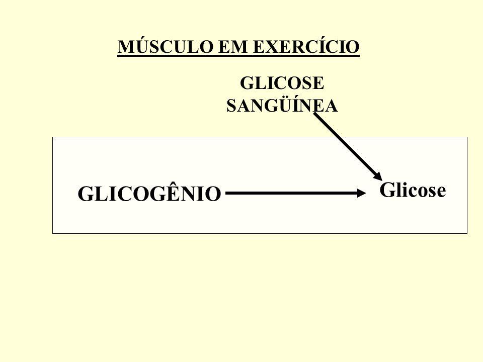 GLICOSE SANGÜÍNEA GLICOGÊNIO Glicose MÚSCULO EM EXERCÍCIO