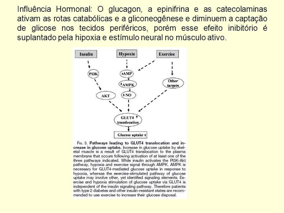Influência Hormonal: O glucagon, a epinifrina e as catecolaminas ativam as rotas catabólicas e a gliconeogênese e diminuem a captação de glicose nos tecidos periféricos, porém esse efeito inibitório é suplantado pela hipoxia e estímulo neural no músculo ativo.