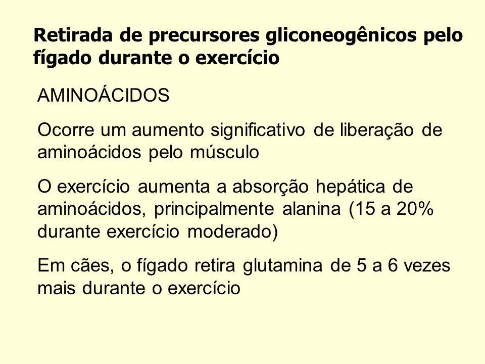 Retirada de precursores gliconeogênicos pelo fígado durante o exercício AMINOÁCIDOS Ocorre um aumento significativo de liberação de aminoácidos pelo músculo O exercício aumenta a absorção hepática de aminoácidos, principalmente alanina (15 a 20% durante exercício moderado) Em cães, o fígado retira glutamina de 5 a 6 vezes mais durante o exercício