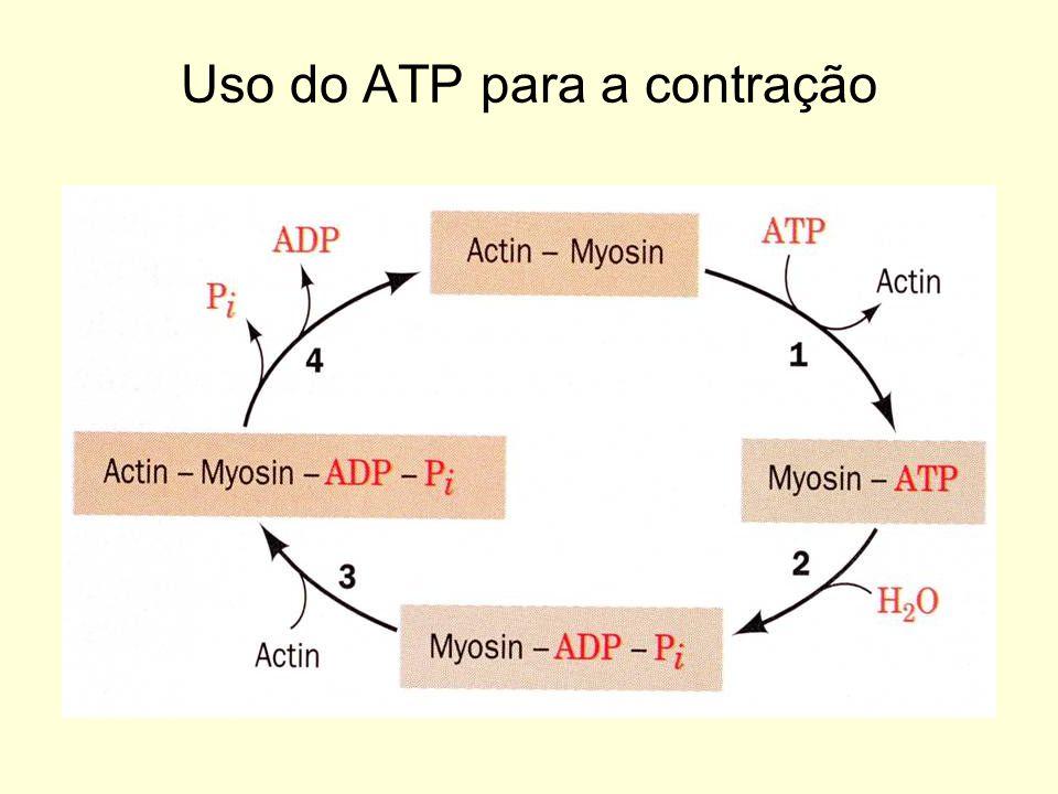 Sistema a Longo Prazo –É o sistema de obtenção de energia mais eficiente e mais complexo, pois há uma interação de várias rotas metabólicas e tecidos.