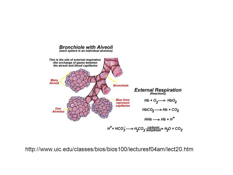http://www.uic.edu/classes/bios/bios100/lecturesf04am/lect20.htm
