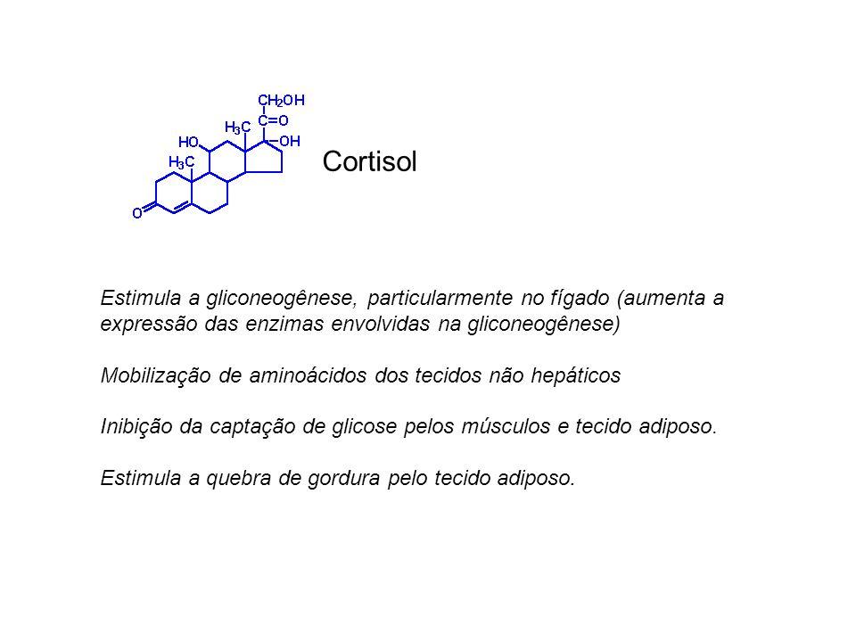 Estimula a gliconeogênese, particularmente no fígado (aumenta a expressão das enzimas envolvidas na gliconeogênese) Mobilização de aminoácidos dos tec