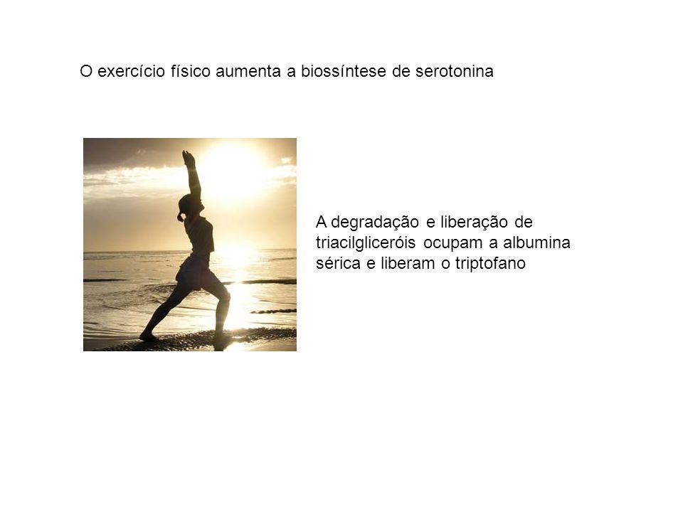 O exercício físico aumenta a biossíntese de serotonina A degradação e liberação de triacilgliceróis ocupam a albumina sérica e liberam o triptofano