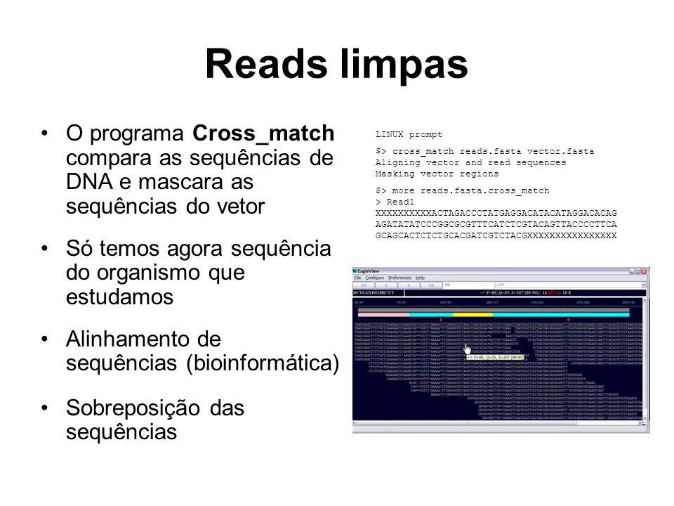 Reads limpas O programa Cross_match compara as sequências de DNA e mascara as sequências do vetor Só temos agora sequência do organismo que estudamos