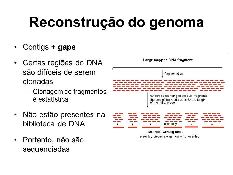 Reconstrução do genoma Contigs + gaps Certas regiões do DNA são difíceis de serem clonadas –Clonagem de fragmentos é estatística Não estão presentes n