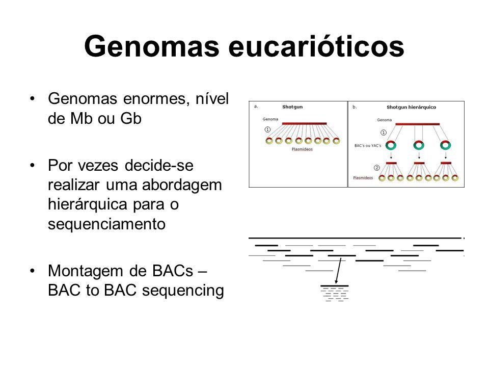 Genomas eucarióticos Genomas enormes, nível de Mb ou Gb Por vezes decide-se realizar uma abordagem hierárquica para o sequenciamento Montagem de BACs