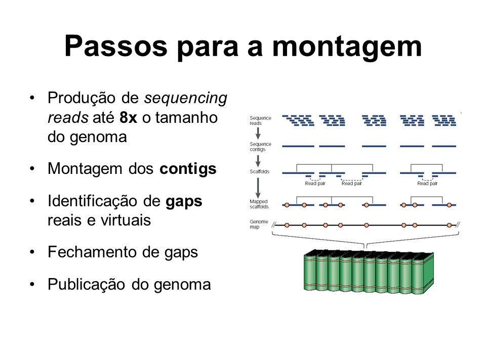 Passos para a montagem Produção de sequencing reads até 8x o tamanho do genoma Montagem dos contigs Identificação de gaps reais e virtuais Fechamento